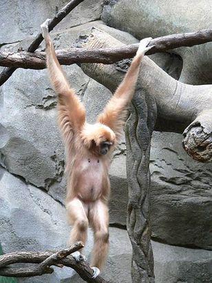 Tiere im Kölner Zoo