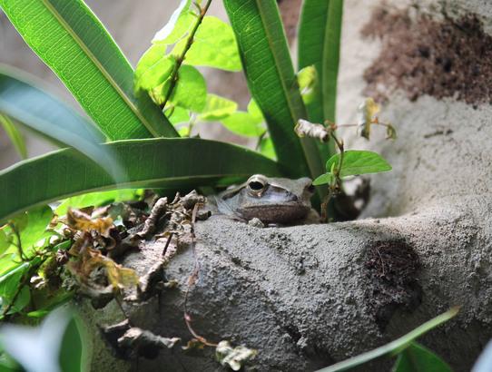 Amphibien im Kölner Zoo