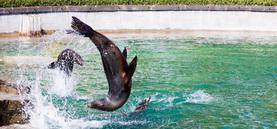Die Tiere im Zoo erkunden ihre Gehege