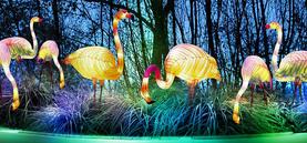 China-Light-Festival im Kölner Zoo: Vorschau
