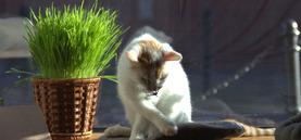 Katzen im Café Schnurrke