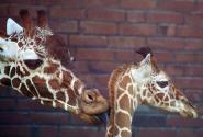 zoo2015_54.jpg