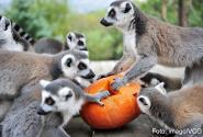 zoo_halloween_1200.jpg