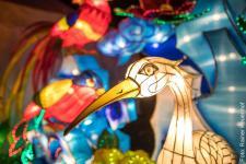 20171125_ChinaLightFestival_Zoo-071_600.jpg