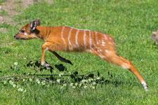 antilope-zoo-wscheurer-225.jpg