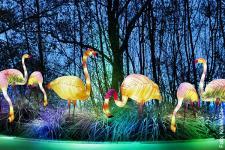 china-light_Flamingo_Koelner-Zoo-2_600.jpg