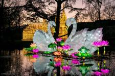 china-light_zoo191204_hl-2978_1200.jpg