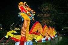 china-light_zoo191204_hl-3012_1200.jpg