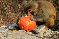 halloween_specials_600.jpg