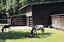 imago0054301442h2_2.horizontal-Tierpark_Tannenbusch_0.jpg
