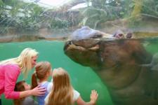 zoo_imagefilm_600.jpg