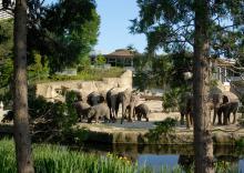 Der Elefantenpark im Kölner Zoo Foto: Kölner Zoo/Rolf Schlosser