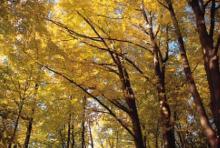 Goldener Oktober: Wandern unterm bunten Blätterdach (Foto: Michael Bengel)