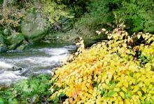 Plätscherndes Wasser, buntes Laub: Die Rur im Herbst (Foto: Jochen Rüffer und Christiane Rüffer-Lukowicz)