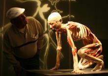 Exponat der Bodies-Ausstellung Echte Leichen in alltäglichen Positionen (Bild: deag.de)