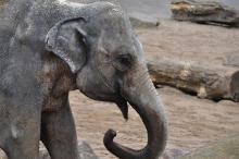 Auch die Elefanten schauen beim Zoolauf zu. (Foto: Christian Rentrop)