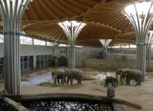 Die Innenanlage des Elefantenparks (Foto: Kölner Zoo)