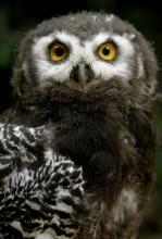 Eulen und Co. können am 31. Oktober im Kölner Zoo bei Nacht beobachtet werden. (Foto: dapd)