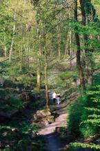 Der Felsengarten - Eine verwunschene Schlucht am Fort VI (Foto: Britta Schmitz)