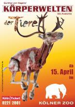 """""""Körperwelten der Tiere"""" gibt es ab dem 15. April im Kölner Zoo zu sehen. (Foto: Körperwelten)"""