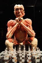 Mehr als Biologie: plastinierte Leiche vor einem Schachbrett. (Foto: Körperwelten)