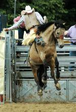 Horse Riding beim Kölner Rodeo- und Country-Wochenende