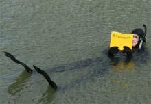 Literatur im Rheinauhafen bei der R(h)einlese