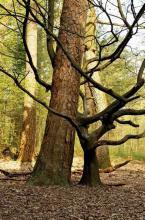 Der Waldlehrpfad im Königsforst. (Foto: Britta Schmitz)