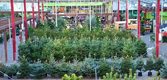 Weihnachtsbaumverkauf Köln