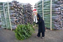 Aus dem Sauerland stammt ein Drittel aller deutschen Weihnachtsbäume. (Foto: Sauerland-Tourismus e.V.)