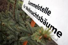 Vorbei ist mit der Pracht - die Weihnachtsbäume wandern in den Müll oder auf den Kompost. (Foto: dapd)