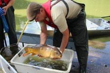 200 Kilo Fische aus Volksgarten-Weiher gefischt
