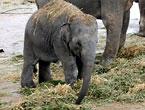 elefant-cr145.jpg