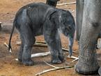 zoo_elefanten1701267_hl-19_145.jpg