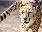 zoo_fruehling145.jpg